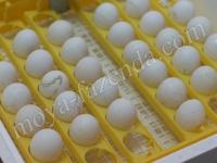 инкубатор на 42 яйца