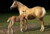 Коневодство - товары для коней
