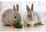 Кролиководство - оборудование для кроликоферм