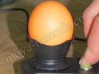 просвечивание яиц