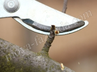ручной обрезыватель веток