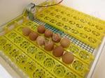 автопереворот яиц