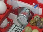 моторчик для переворота яиц