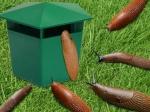 Многоразовая ловушка для улиток и слизняков