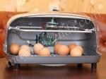 устройство для разведения цыплят