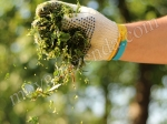 зеленый корм для животных